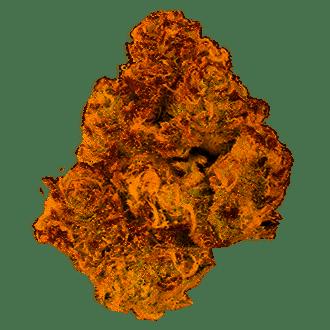 Grape Stomper Marijuana Strain