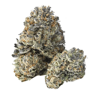 Wookie Girl - Shop FL Dispensaries