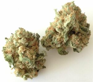 Chronic Widow Marijuana Strain