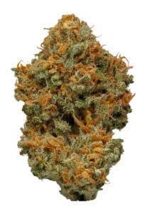 Dream Queen Marijuana Strain