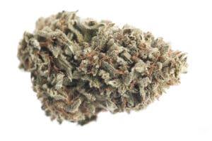 Pineapple Haze Marijuana Strain