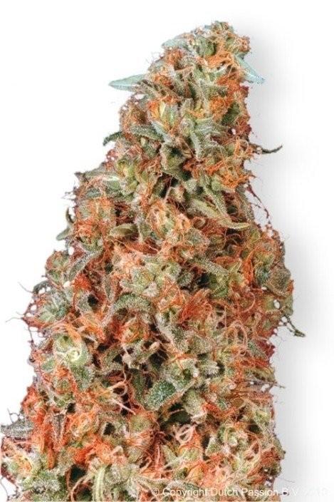 Power Plant Marijuana Strain