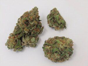 critical mass marijuana strain