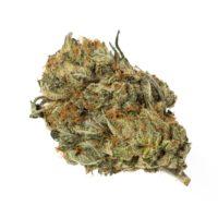 Harlequin GDP Marijuana Strain