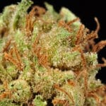 Mandarin Cookies Marijuana Strain