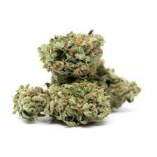 Agent Orange Cannabis Strain