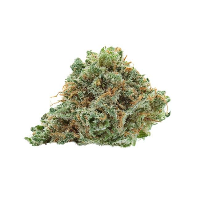 grimmdica strain